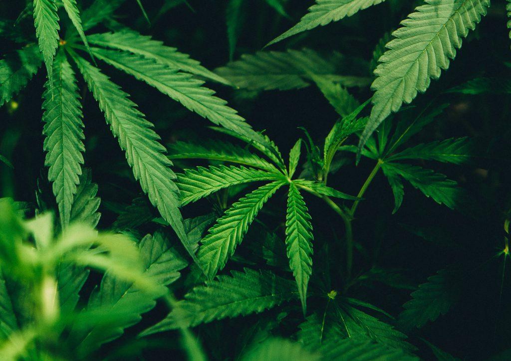 Alberta Cannabis Retail Market Update